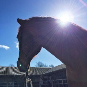 Hest på Klank